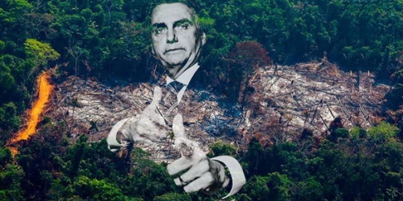 Lições do pau-brasil: os crimes ambientais